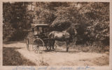 "Horse, ""courting"" carriage, and driver, circa 1913."