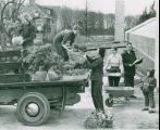 Crew from the School of Horticulture for Women, loading a truck with plants for their show...