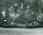 1954 Styers Nurseries exhibit